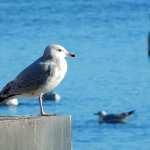 Gli albatri in volo: oggi nasce il nostro Blog